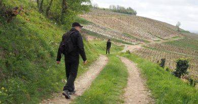 walking in the chablis wine region