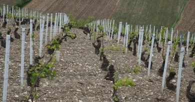 Video: in the Grand Cru Vineyards of Chablis
