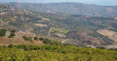 lyrarakis wine crete