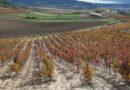 Ribero del Duero: an introduction to this important Spanish wine region
