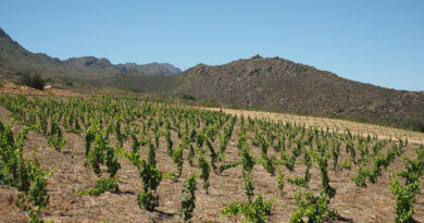 Video: what's next for sustainability in South Africa's wine regions?