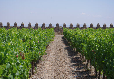 Torres Anthologia: high-end wines from this important Spanish winery