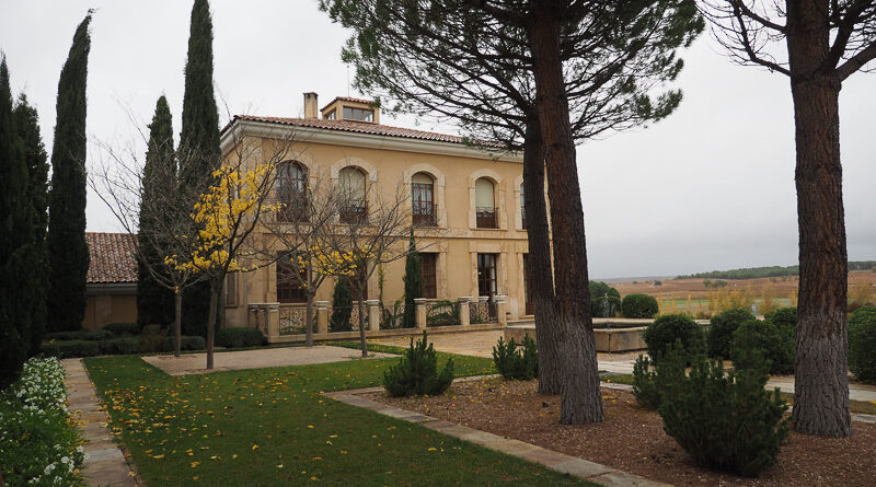 In Ribera del Duero: Áster