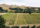 New Zealand and Oregon Pinot Noir: wines from the edge