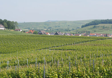 Some top Chardonnays from Baden, Germany