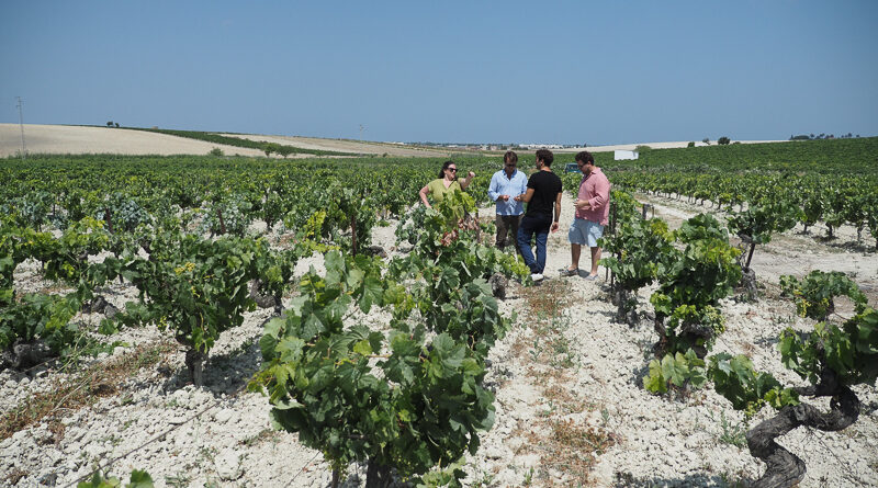 Muchada-Léclapart: amazing unfortified white wines from Sanlúcar