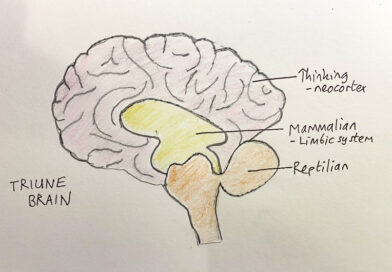 The triune brain, and thinking of a triune wine tasting approach