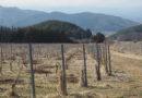 In Nagano, Japan: Hayashi Noen (Hayashi Winery, Goichi Wine)