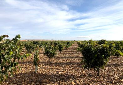 Visiting Pintia: Vega Sicilia's winery in Toro, Spain
