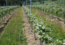 Video: visiting Busi-Jacobsohn, a new sparkling wine producer in East Sussex, England