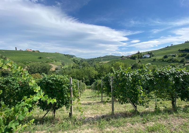 Barolo Le Coste vineyard, Giuseppe Rinaldi
