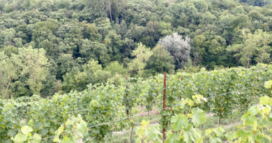 Visiting Gaja, one of Piedmont's top producers, and seeing the new Alta Langa vineyards