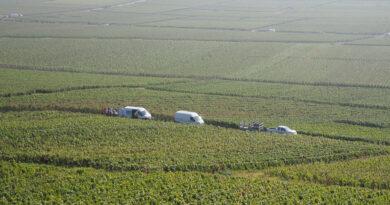 Harvest in Champagne, September 2021